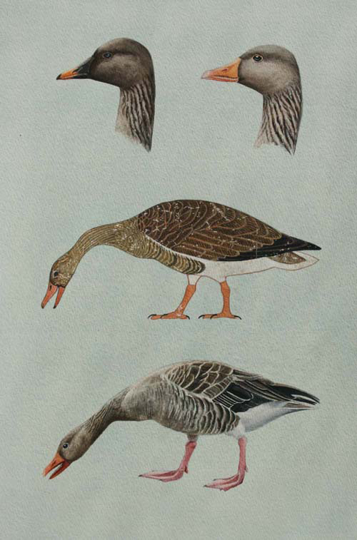 Meidum Geese by Jackie Garner