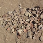 Pottery sherds. Photograph by Andrea Byrnes